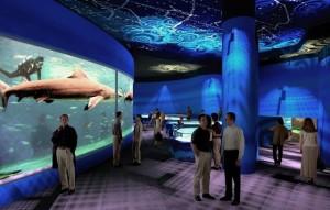 Swim with Sharks in South America's Biggest Aquarium ...
