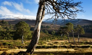 The stalking estate of Glenfeshie is the Cairngorm home of Anders and Anne Holch Povlsen. Photograph- Murdo MacLeod/The Guardian