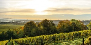 England's first carbon neutral vineyard hotel: solar-powered luxury!