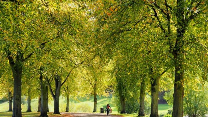 Two studies find that trees make people healthier and happier