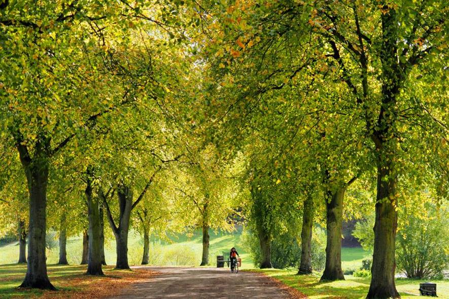 Photo of lime tree avenue, by Jim Roberts