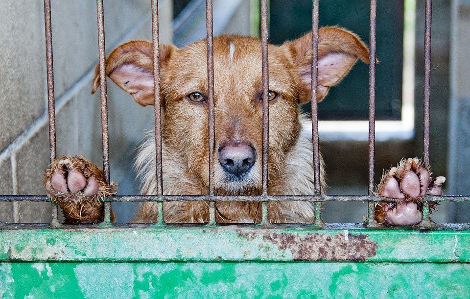 caged dog. Photo by Amaya Guizabal on Pixabay